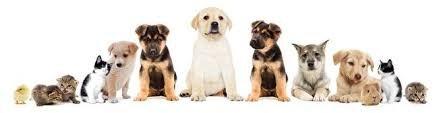 Homeopathie-voor-dieren